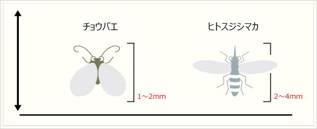 チョウバエ・ヒトスジシマカ・トビイロケアリ